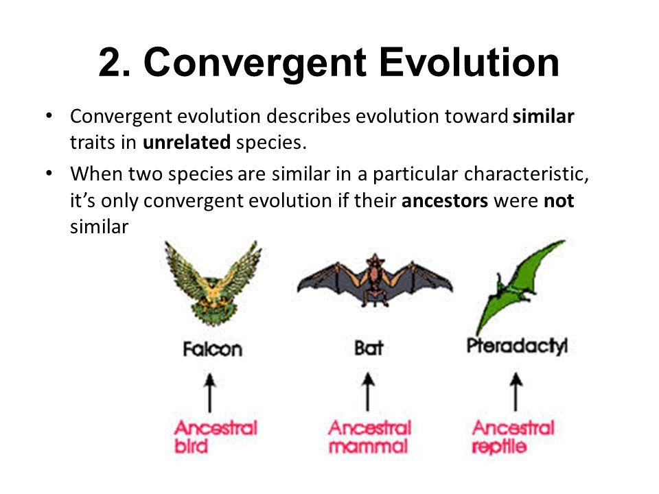 2. Convergent Evolution Convergent evolution describes evolution toward similar traits in unrelated species.