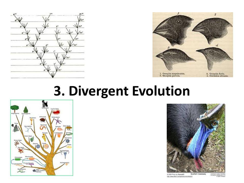 3. Divergent Evolution