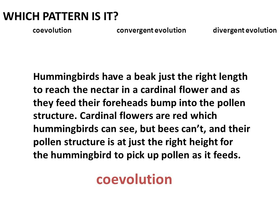coevolution WHICH PATTERN IS IT