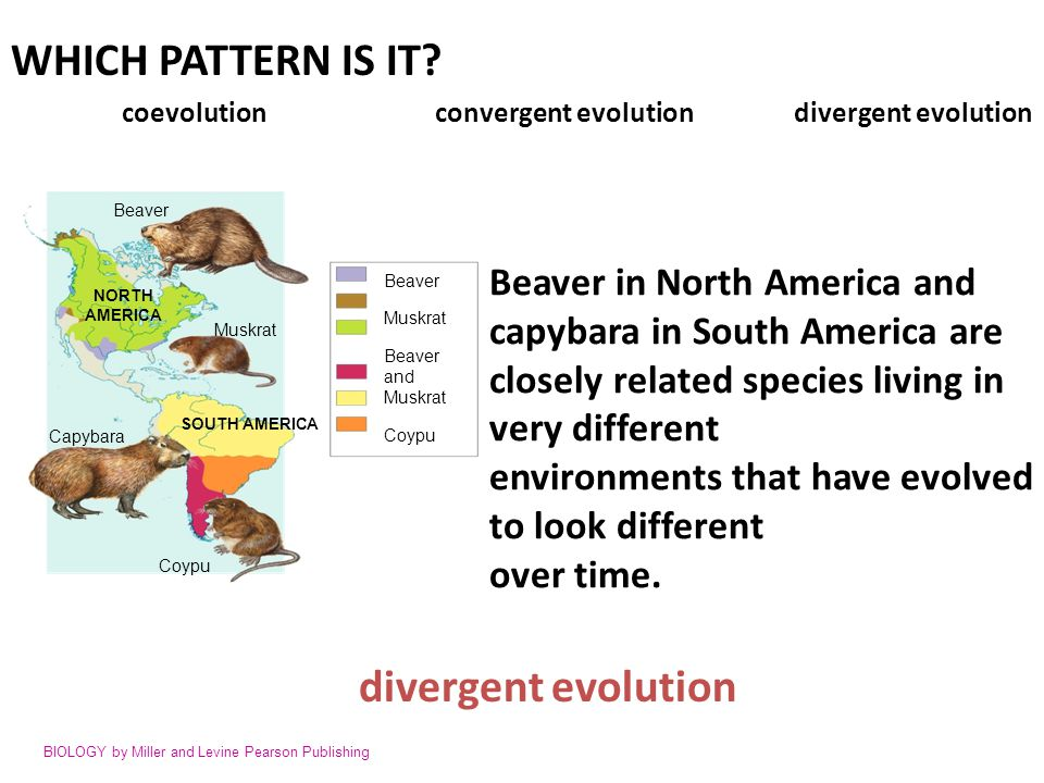 WHICH PATTERN IS IT divergent evolution