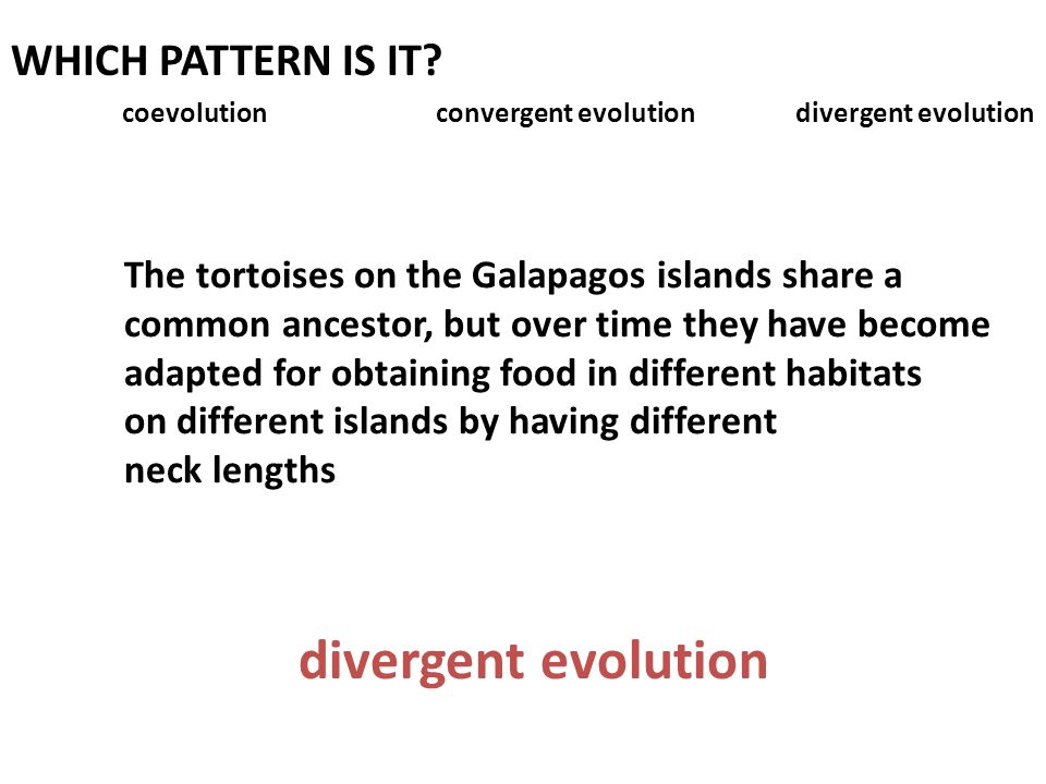 divergent evolution WHICH PATTERN IS IT