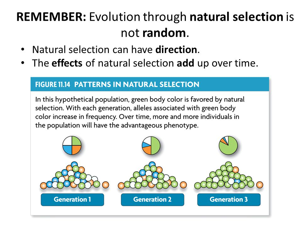 REMEMBER: Evolution through natural selection is not random.
