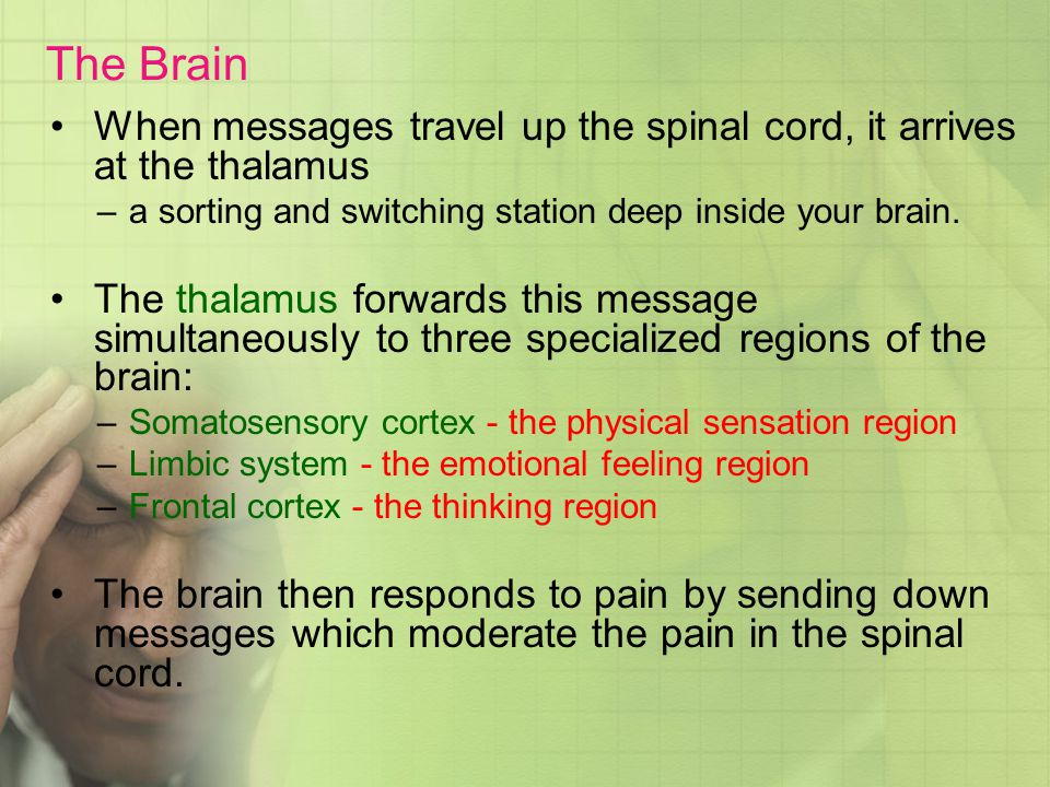 The Brain When messages travel up the spinal cord, it arrives at the thalamus. a sorting and switching station deep inside your brain.