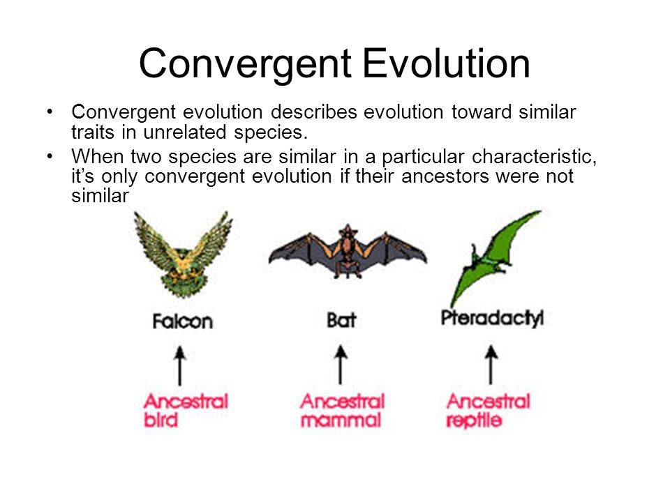 Convergent Evolution Convergent evolution describes evolution toward similar traits in unrelated species.