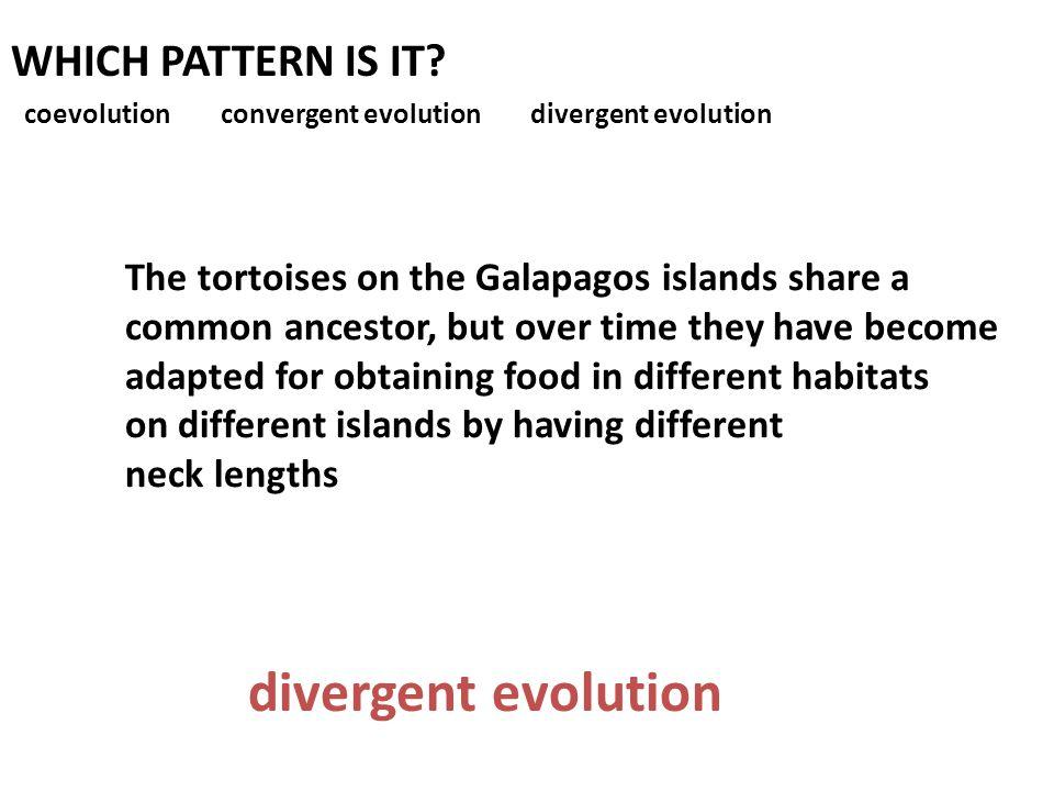 divergent evolution WHICH PATTERN IS IT