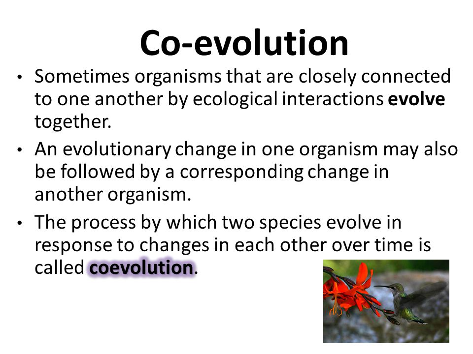 Co-evolution Sometimes organisms that are closely connected to one another by ecological interactions evolve together.