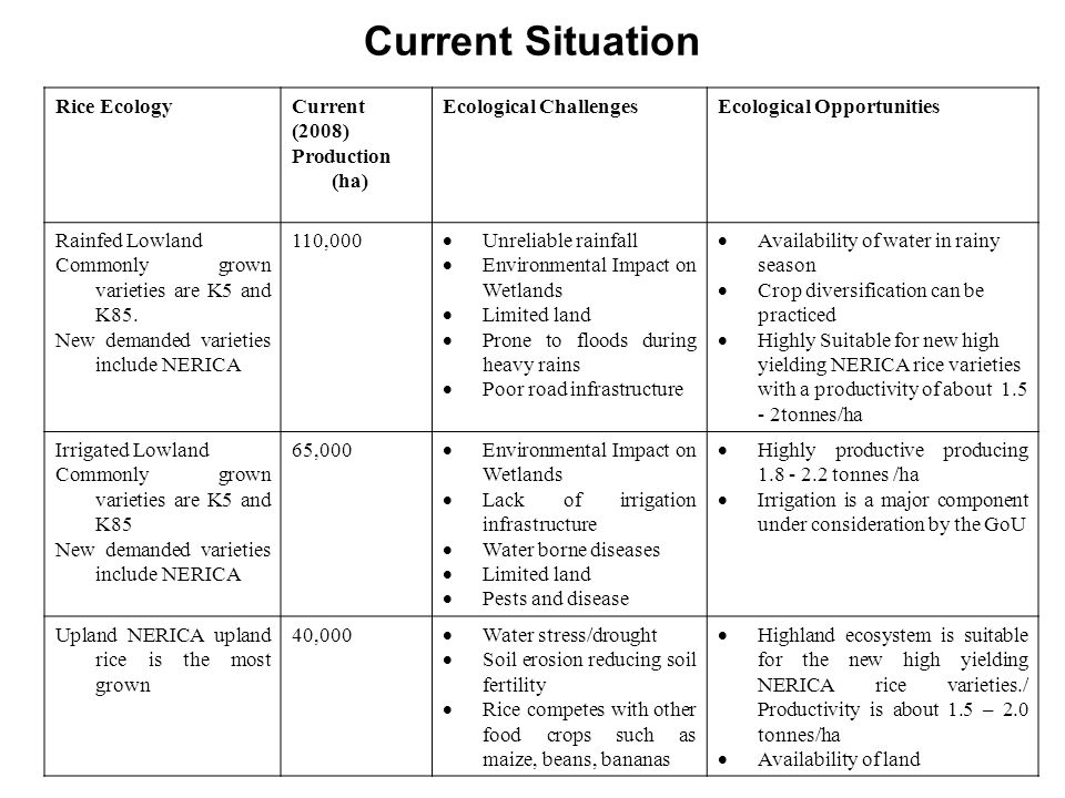 Current Situation Rice Ecology Current (2008) Production (ha)
