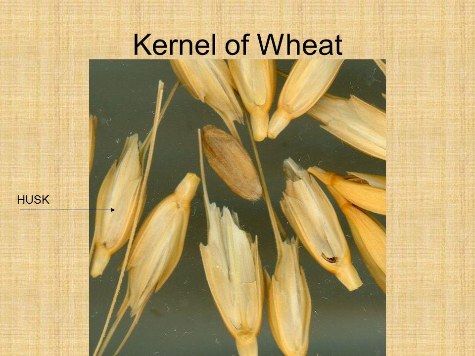 Kernel of Wheat HUSK
