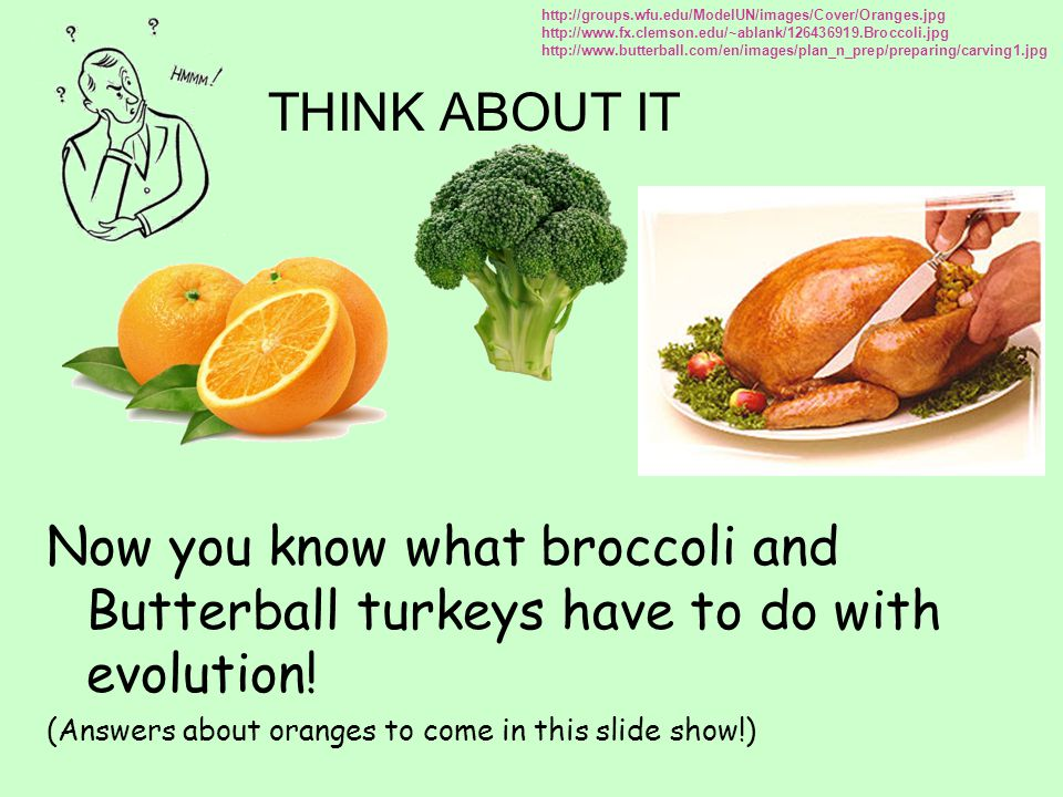 http://groups.wfu.edu/ModelUN/images/Cover/Oranges.jpg http://www.fx.clemson.edu/~ablank/126436919.Broccoli.jpg.