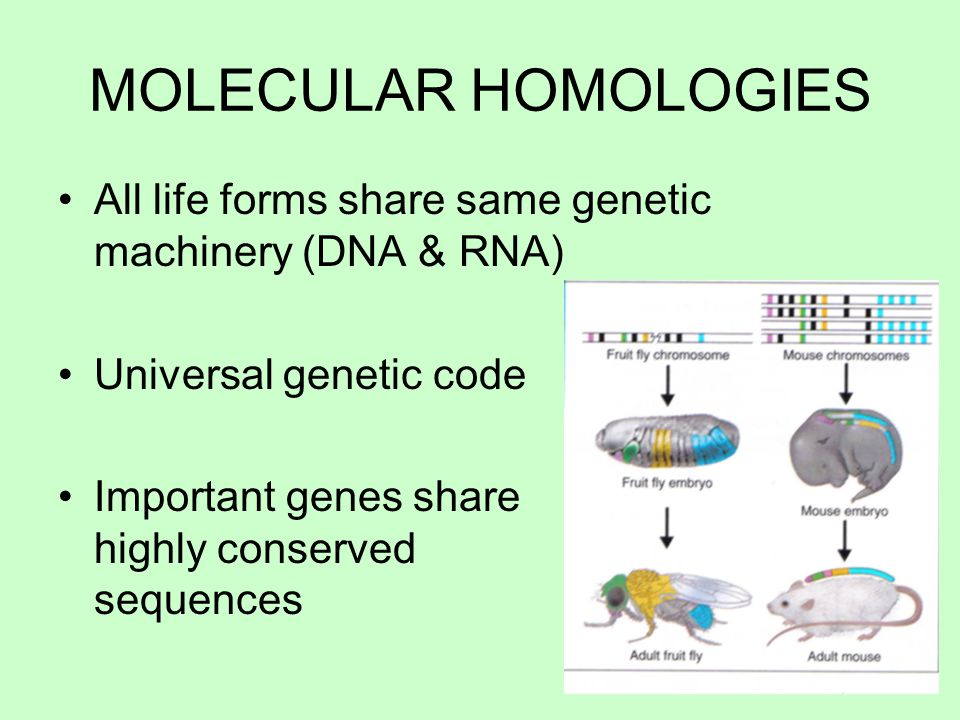 all life forms are important Chapter 3: biological molecules 1 carbohydrates 2 lipids 3 proteins 4 nucleic acids  • can form bonds with up to 4 other atoms  important functional groups all biological molecules are basically carbon skeletons w/ various functional groups attached.