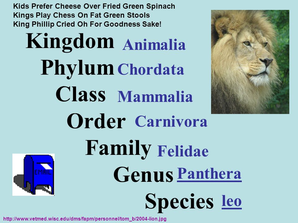 Kingdom Phylum Class Order Family Genus Species Animalia Chordata