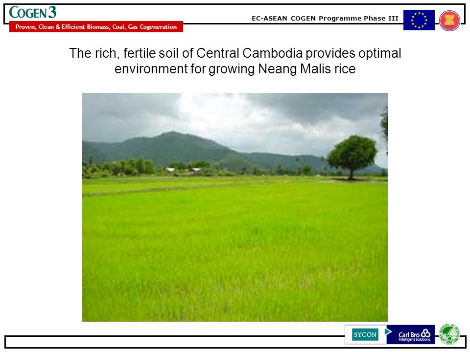 The rich, fertile soil of Central Cambodia provides optimal environment for growing Neang Malis rice