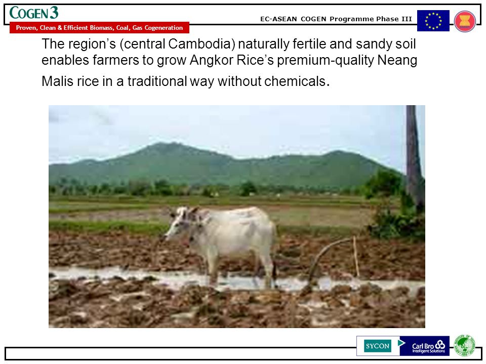 The region's (central Cambodia) naturally fertile and sandy soil enables farmers to grow Angkor Rice's premium-quality Neang Malis rice in a traditional way without chemicals.