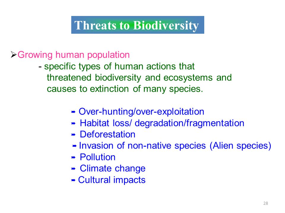 What's the Earth's biggest threat to biodiversity?