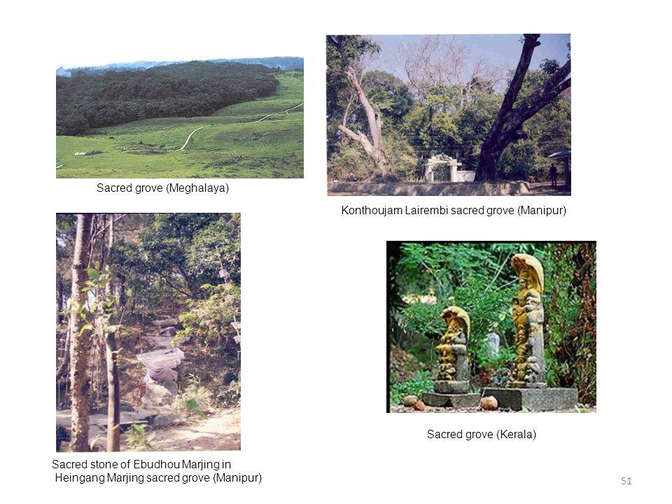 Sacred grove (Meghalaya)