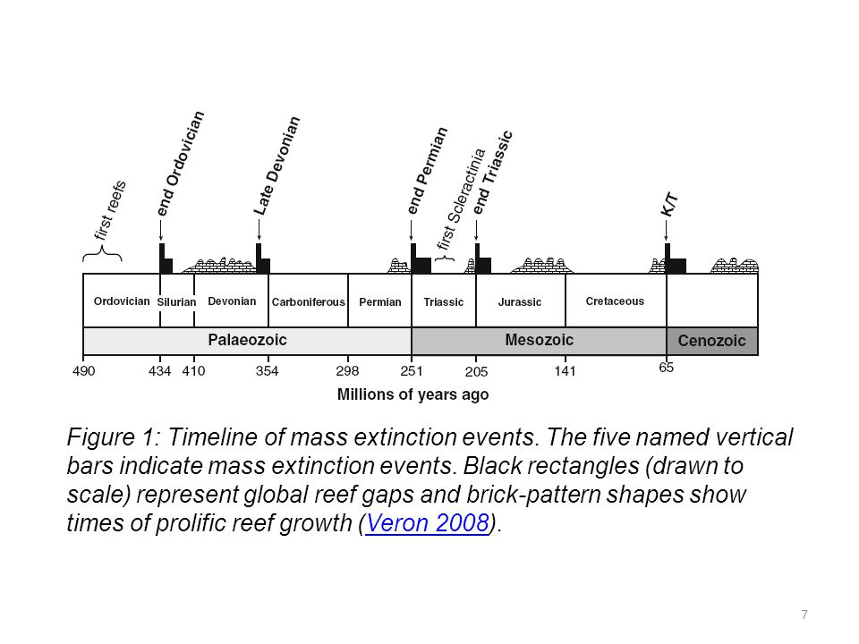 Figure 1: Timeline of mass extinction events
