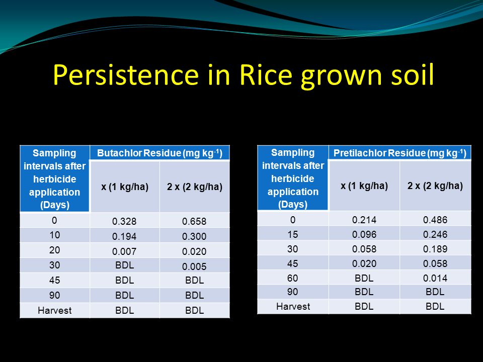 Persistence in Rice grown soil