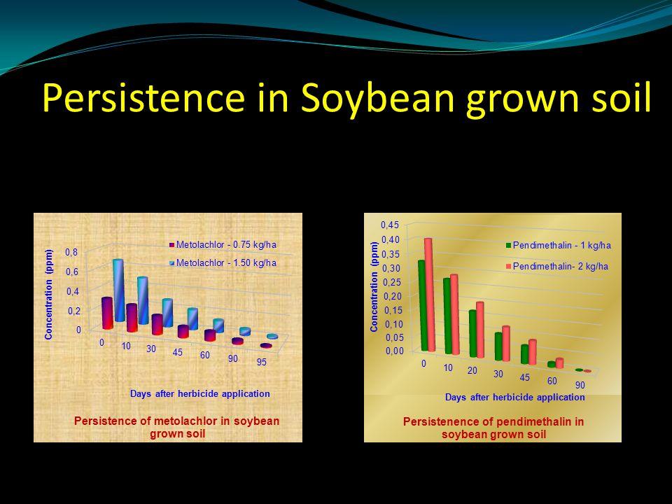 Persistence in Soybean grown soil
