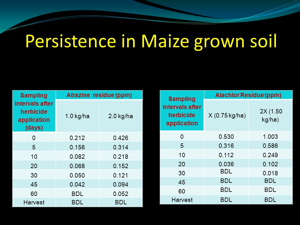 Persistence in Maize grown soil