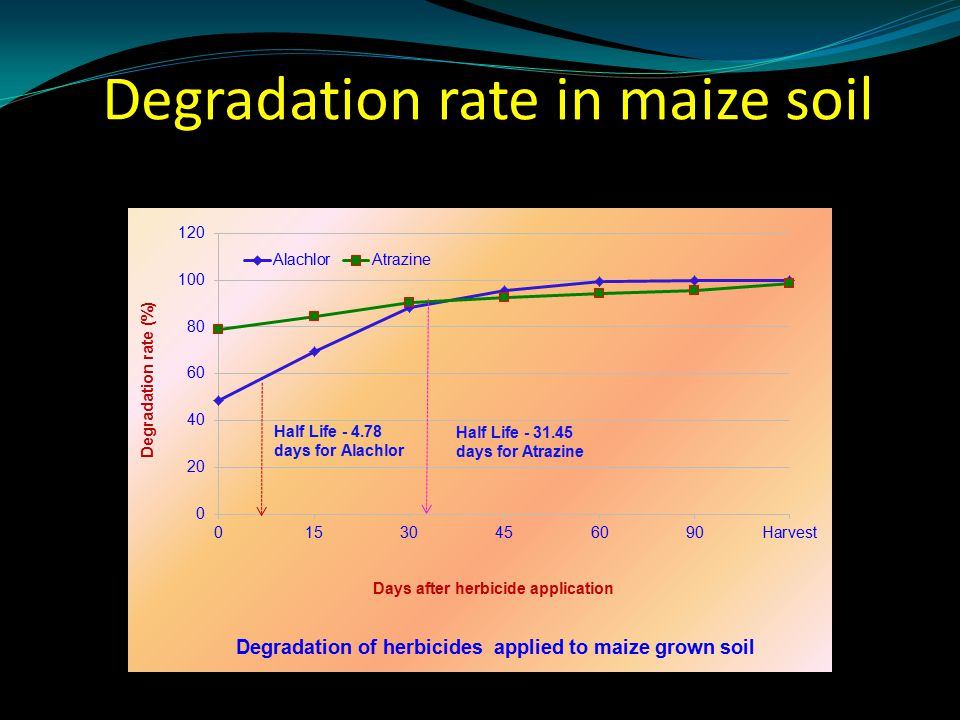 Degradation rate in maize soil
