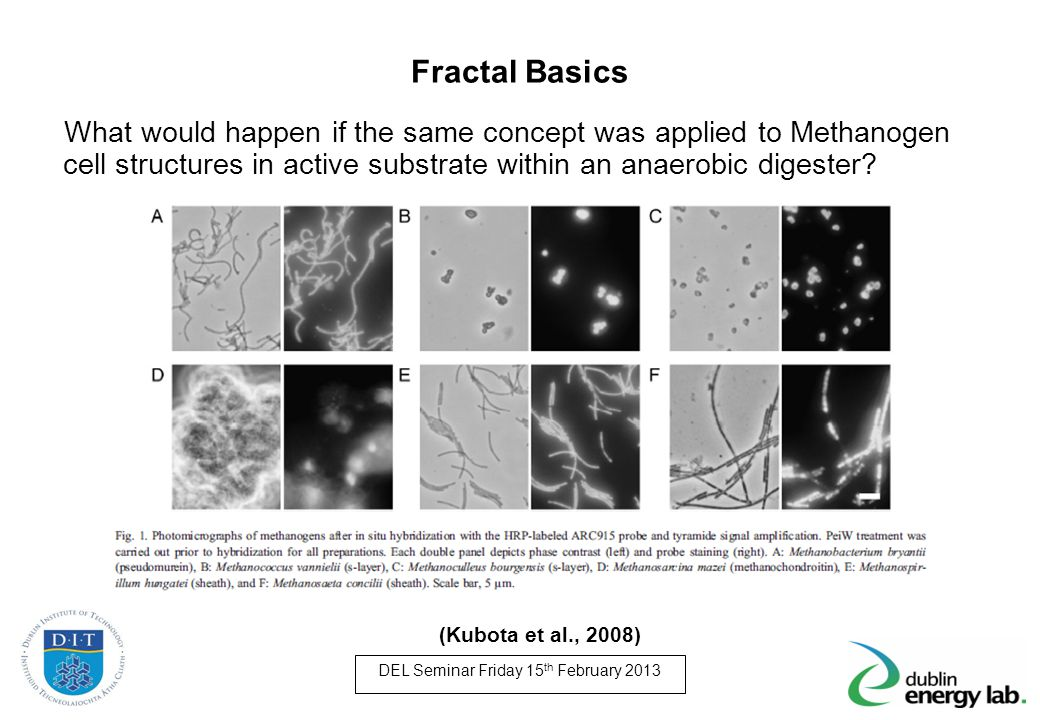 Fractal Basics What would happen if the same concept was applied to Methanogen cell structures in active substrate within an anaerobic digester