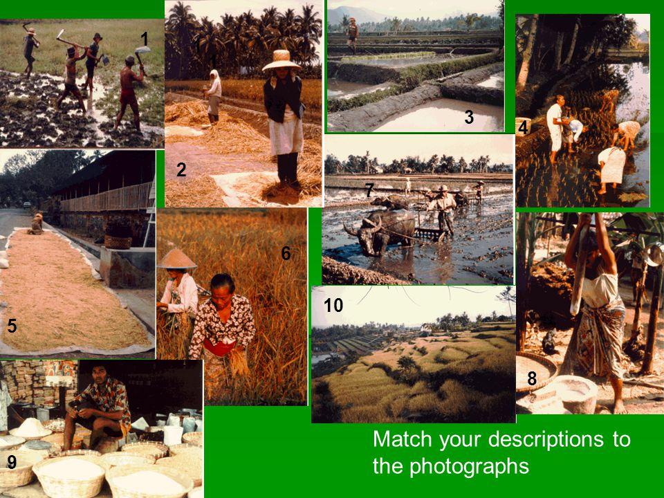 Match your descriptions to the photographs