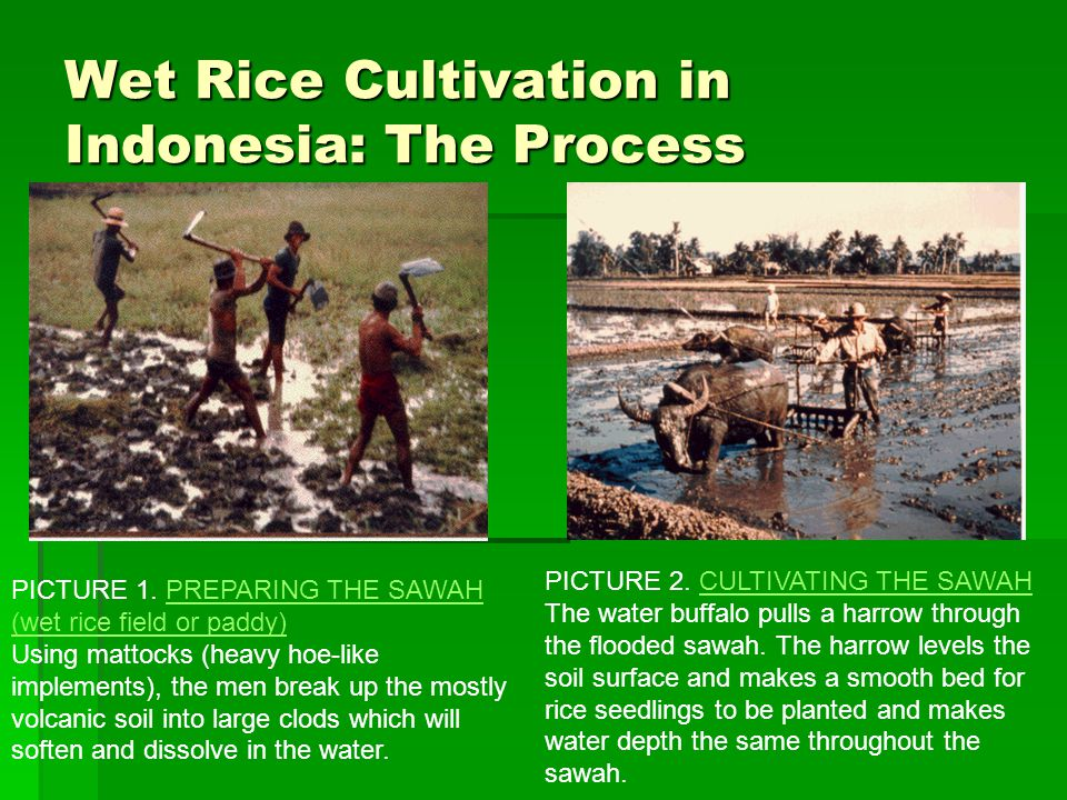 Unit 3: Subsistence Wet Rice Farming - ppt download