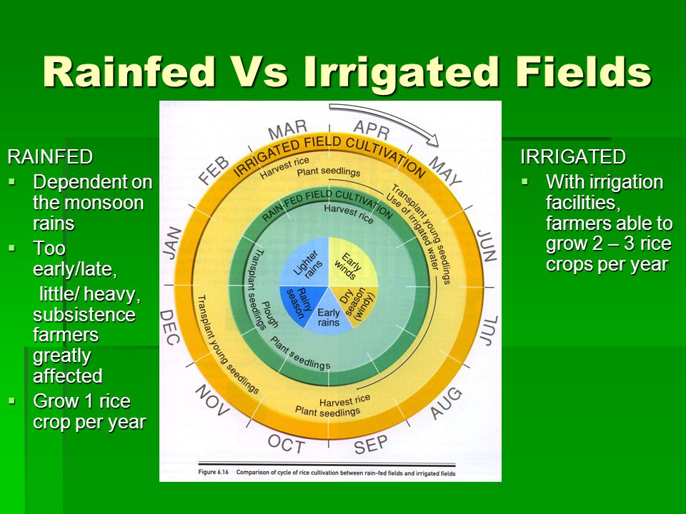 Rainfed Vs Irrigated Fields