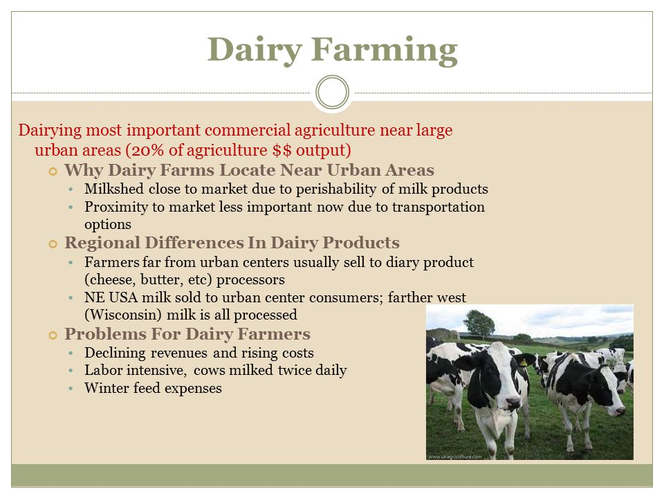 Dairy Farming Dairying most important commercial agriculture near large urban areas (20% of agriculture $$ output)