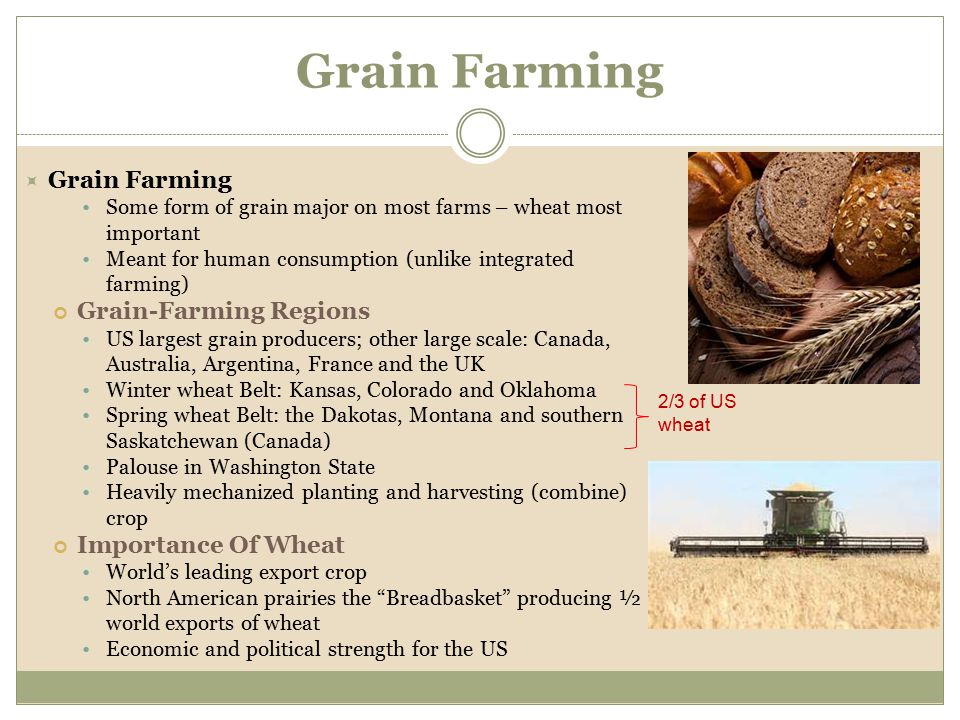 Grain Farming Grain Farming Grain-Farming Regions Importance Of Wheat