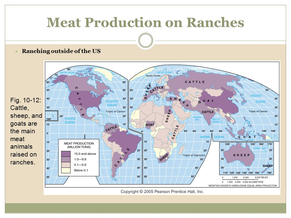 Meat Production on Ranches