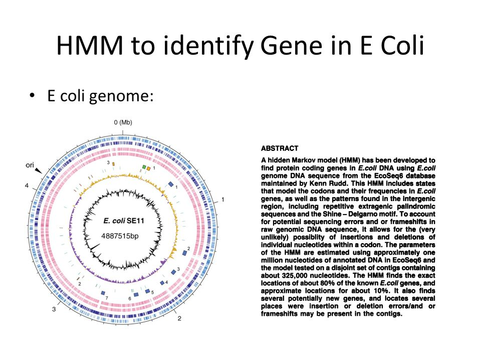 HMM to identify Gene in E Coli