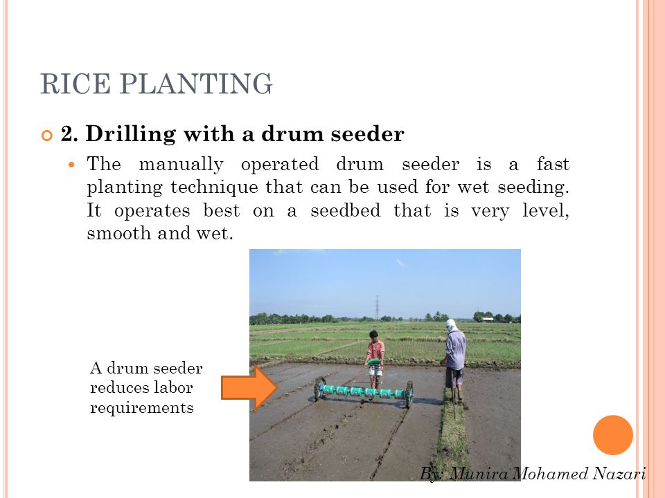 RICE PLANTING 2. Drilling with a drum seeder