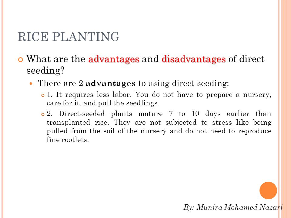 RICE PLANTING What are the advantages and disadvantages of direct seeding There are 2 advantages to using direct seeding: