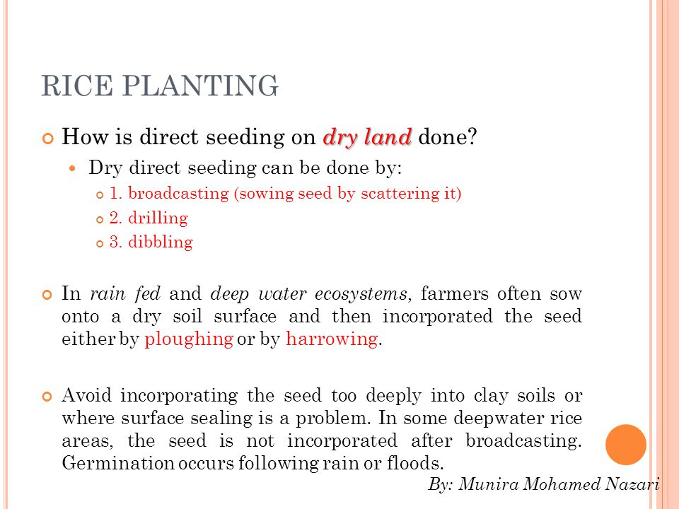 RICE PLANTING How is direct seeding on dry land done