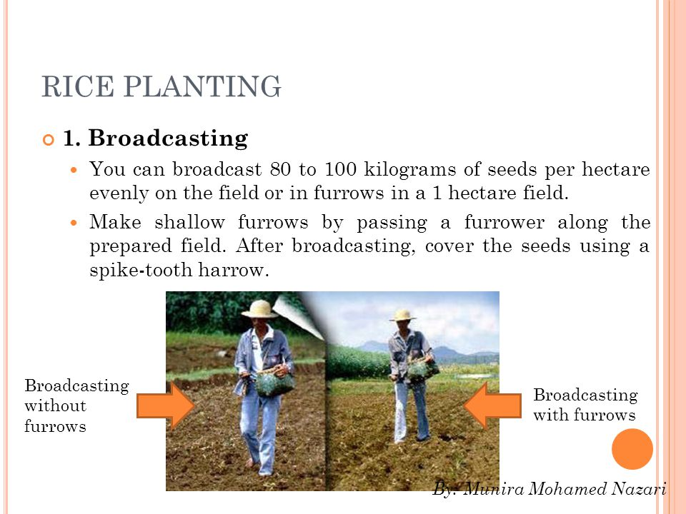 RICE PLANTING 1. Broadcasting