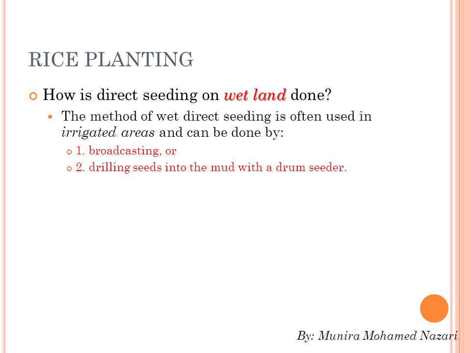 RICE PLANTING How is direct seeding on wet land done