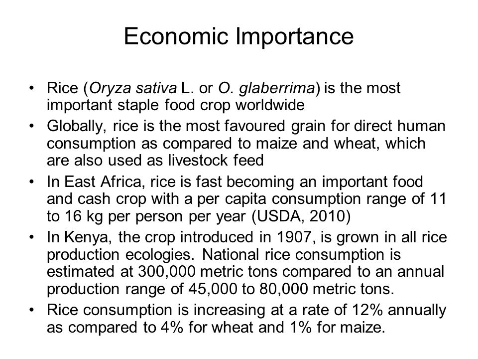 Economic Importance Rice (Oryza sativa L. or O. glaberrima) is the most important staple food crop worldwide.