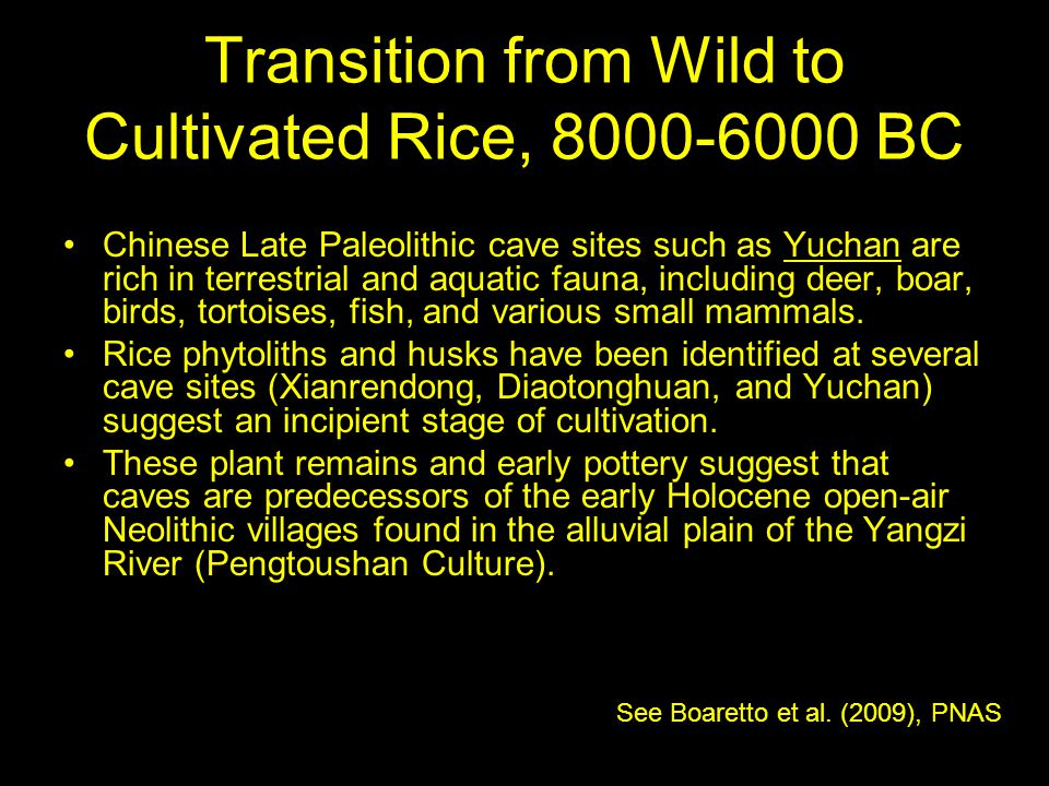 Transition from Wild to Cultivated Rice, 8000-6000 BC
