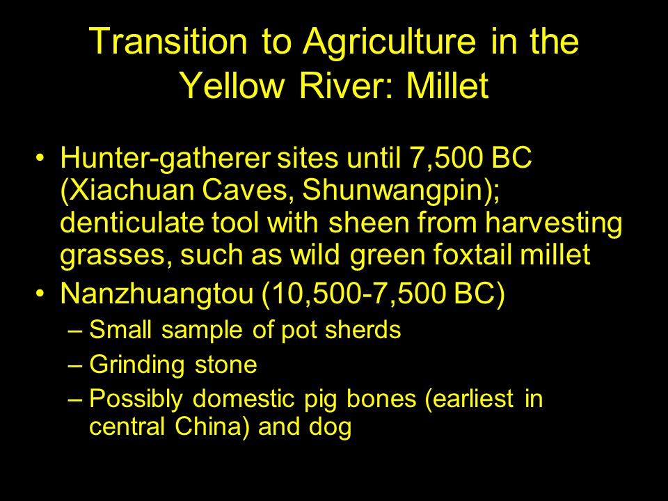 Transition to Agriculture in the Yellow River: Millet