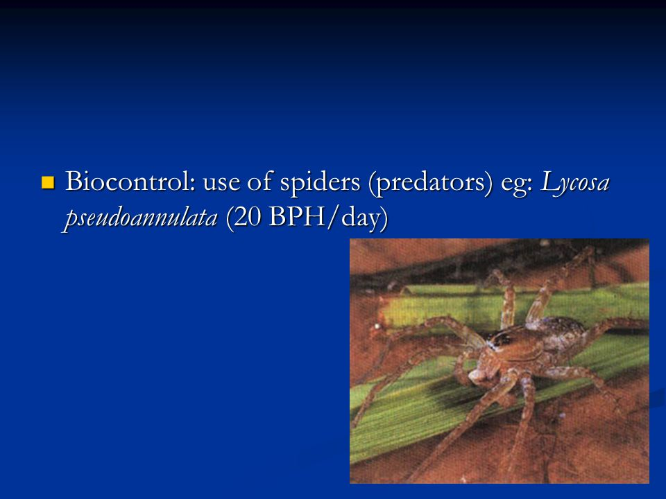 Biocontrol: use of spiders (predators) eg: Lycosa pseudoannulata (20 BPH/day)
