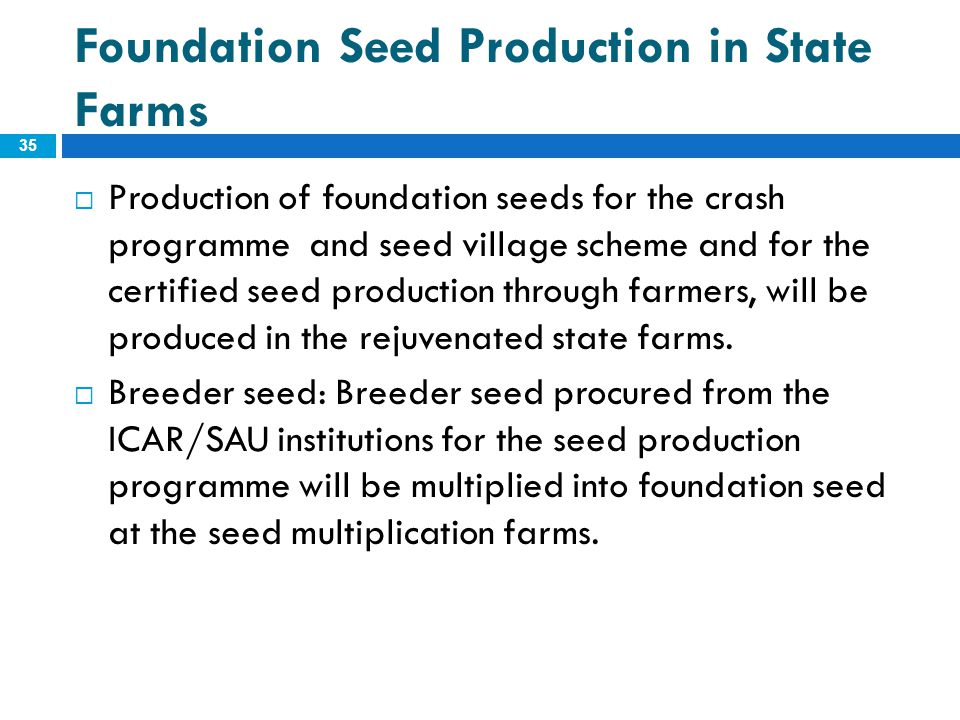 Foundation Seed Production in State Farms