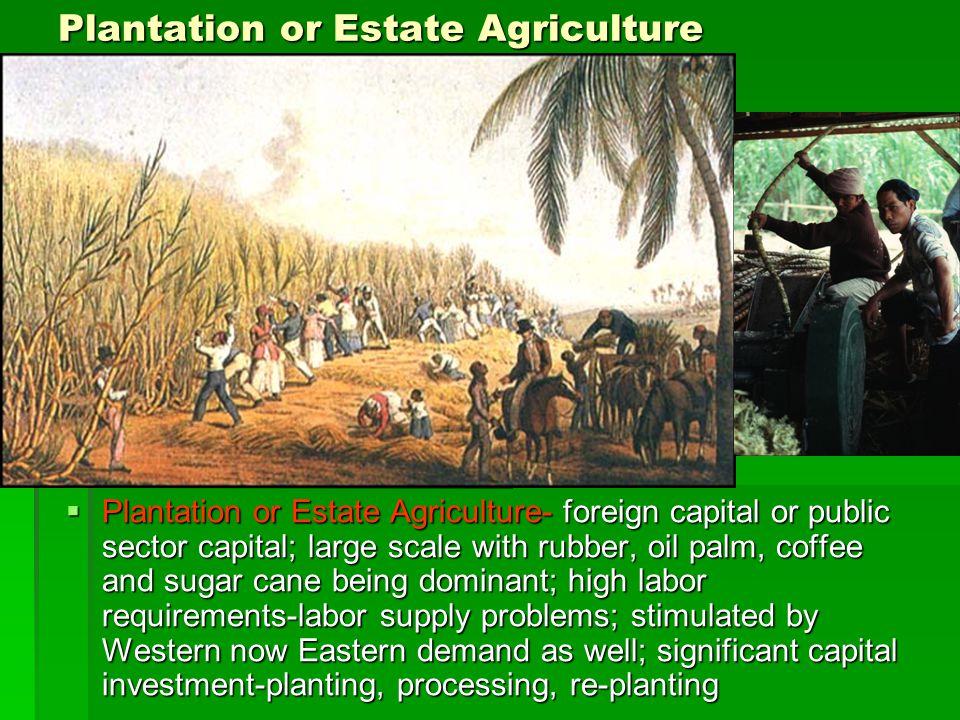 Plantation or Estate Agriculture