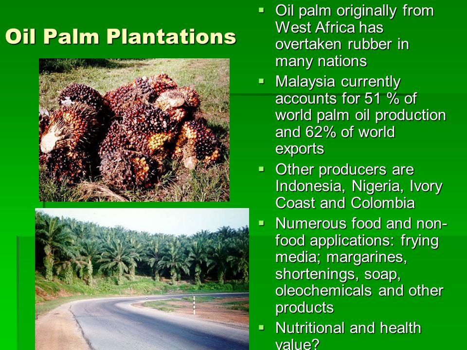 Oil Palm Plantations Oil palm originally from West Africa has overtaken rubber in many nations.