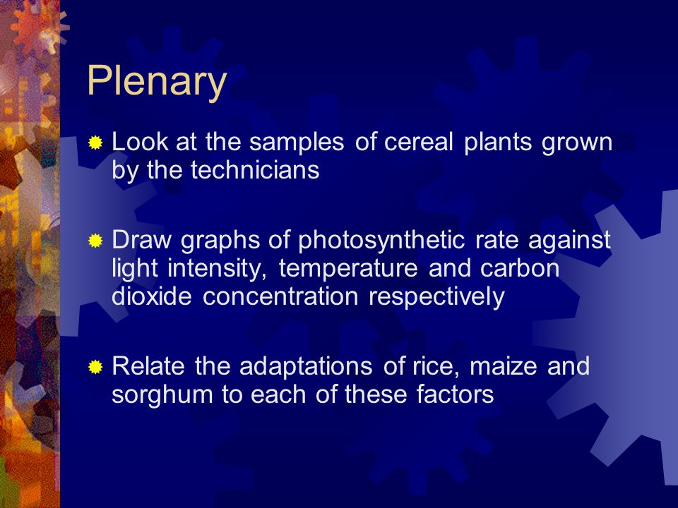 Plenary Look at the samples of cereal plants grown by the technicians