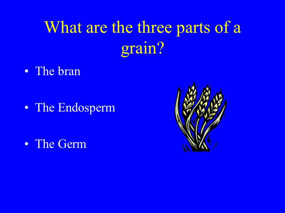 What are the three parts of a grain