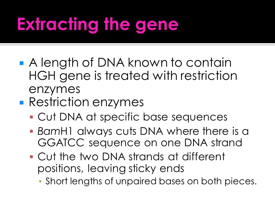 Extracting the gene A length of DNA known to contain HGH gene is treated with restriction enzymes. Restriction enzymes.