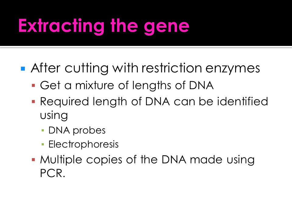 Extracting the gene After cutting with restriction enzymes