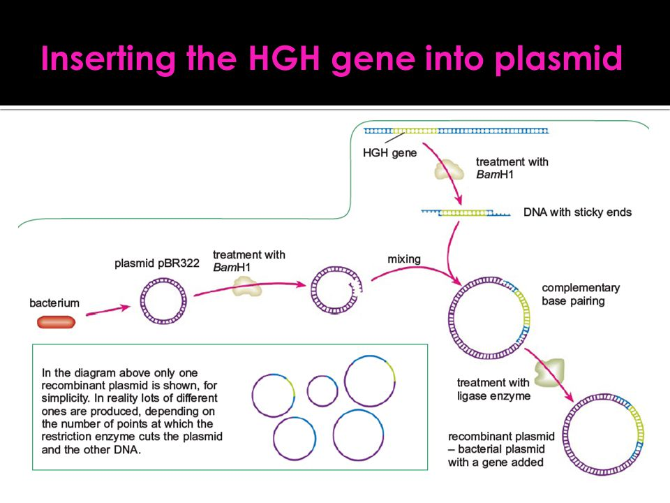 Inserting the HGH gene into plasmid