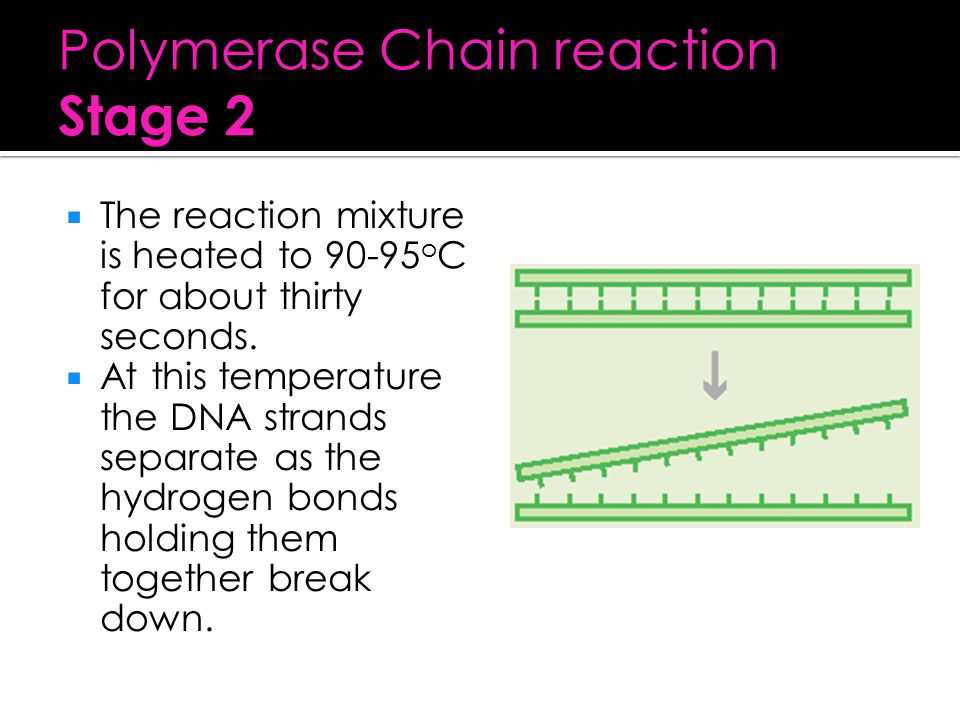 Polymerase Chain reaction Stage 2